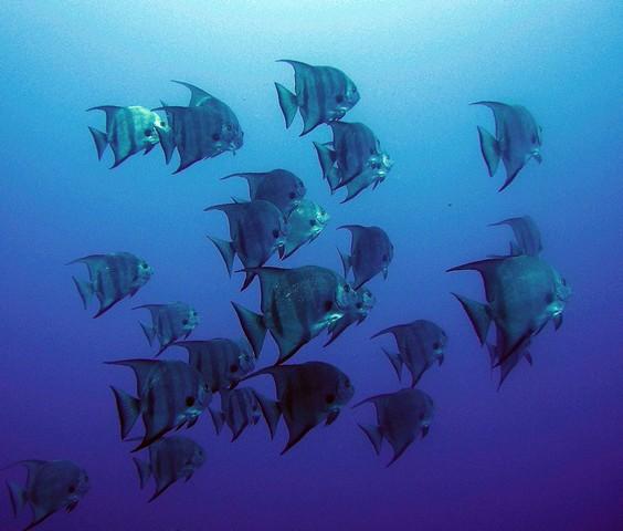 Atlantis Plongée